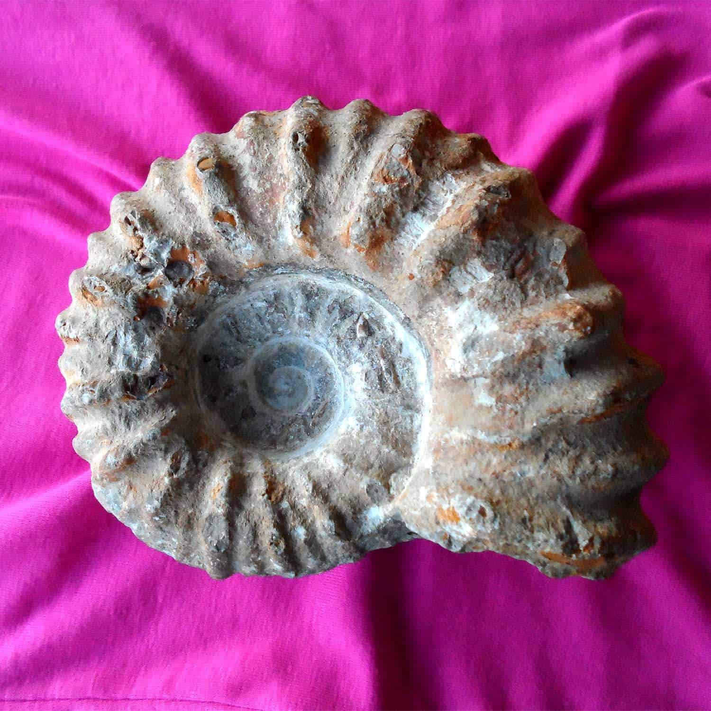 HeilSteinBeschreibungen der Neuen Zeit - GrundINFO Ammonit